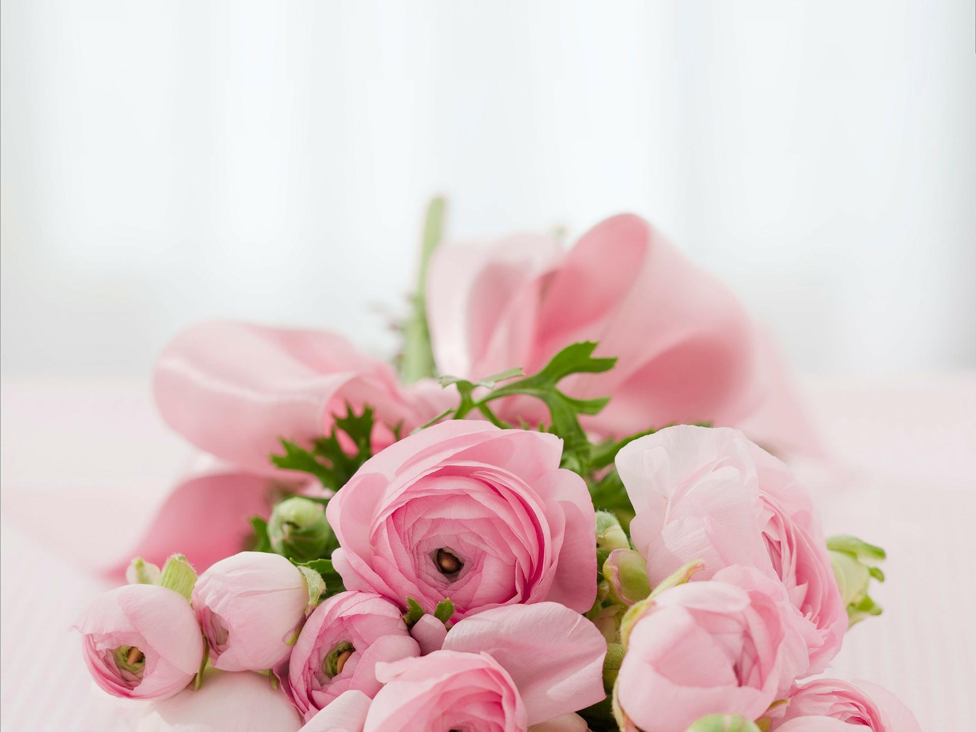 バラの花言葉を本数で判断する・21個の意味合い 1