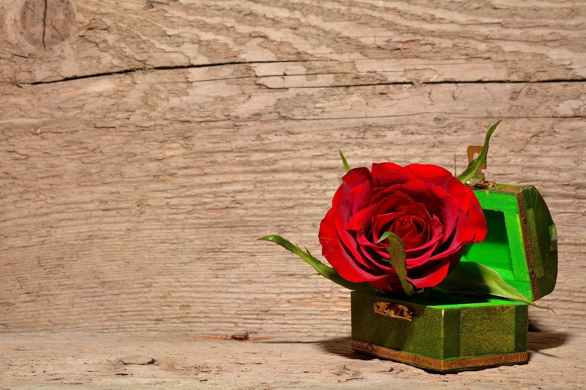 バラの花言葉を本数で判断する・21個の意味合い 2
