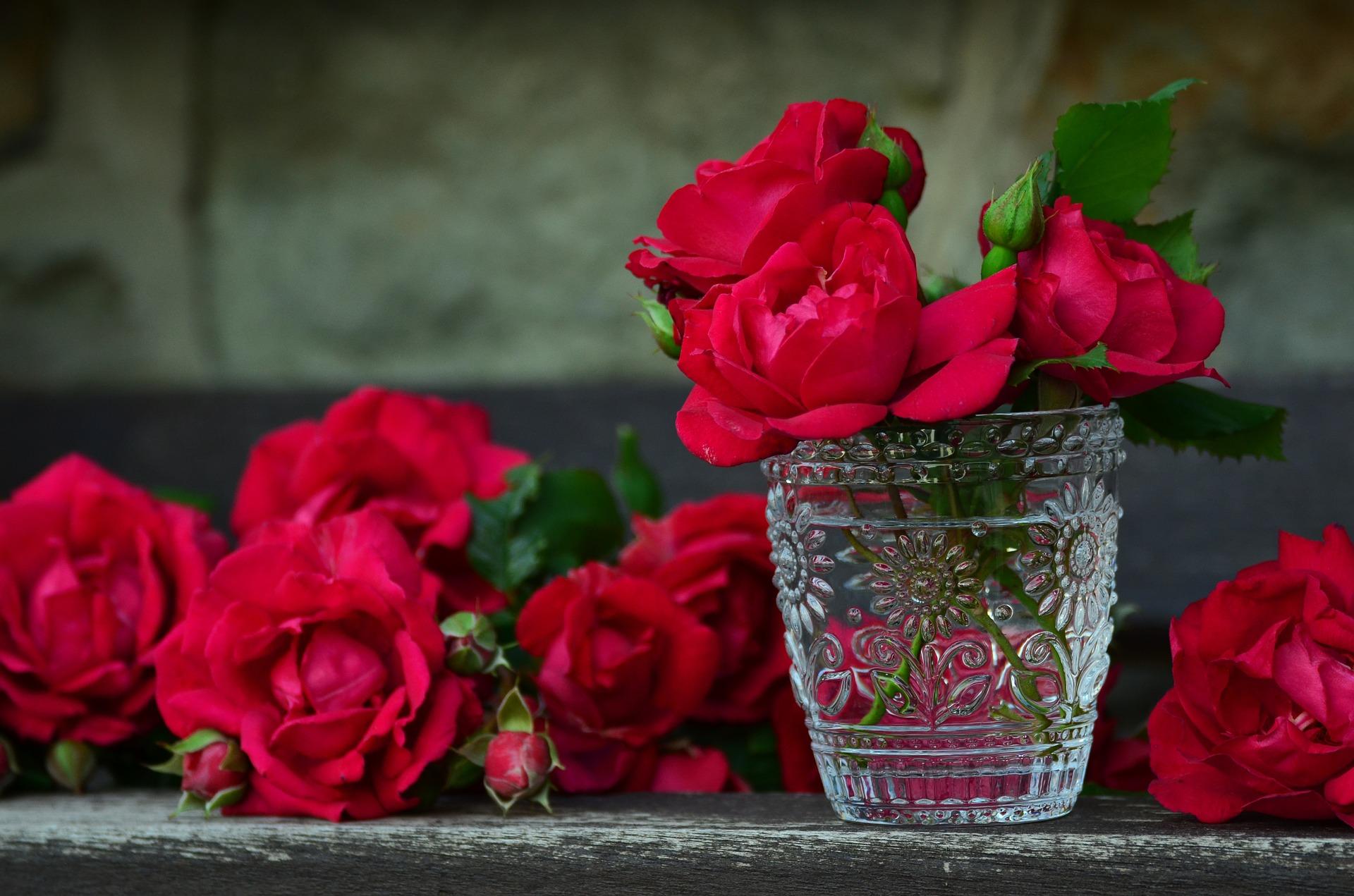 バラの花言葉を色で判断する・11色 1