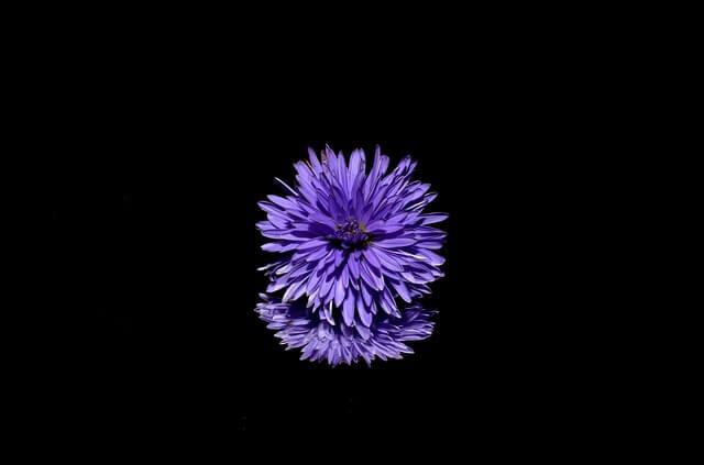 紫色を好む男性とカップルになる3つの方法1